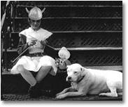 Knitter-Dog