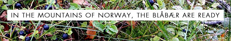 Autumn Blueberries in Norway